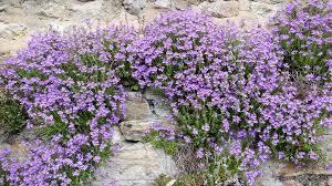 wall flowers cabinet of curiosities wall flowers in weardale