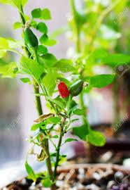 backyard windowsill vegetable gardening best vegetables grow you
