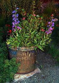 Plants For Patios In The Shade Native Plant Gardens In Containers California Native Plant Society