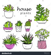 illustration houseplants indoor office plants pot stock vector