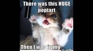 The Best Cat Memes - compilation archives the meme planet