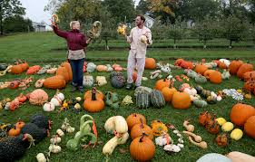 this minnesota garden is full of 263 varieties of squash and