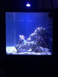 Floating Aquascape Reef2reef Saltwater And Reef Aquarium Forum - haggisman14 u0027s oceanic biocube 29 reef2reef saltwater and reef