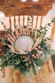 native australian flowering plants best 25 australian native flowers ideas on pinterest australian