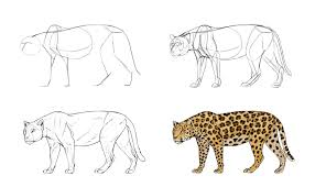 how to draw big cats lions tigers cheetahs and much more