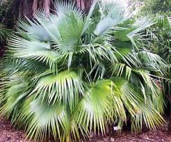 palm tree seeds in retail packs from around the world
