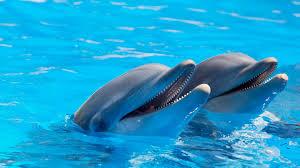 delfin wallpaper buscar con google delfines pinterest happy dolphins in the blue water wall mural
