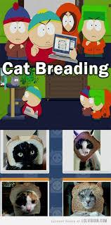South Park Meme Episode - cat breading memes introduced in south park season 16 episode 3