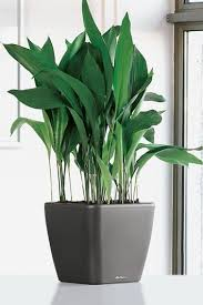 Easy To Care For Indoor Plants Easy To Care For Plants For Busy Homeowners Part 1 Home