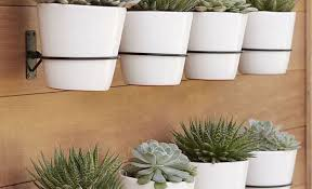 eye catching photo different house plants like plant planters