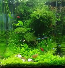 Planted Aquarium Aquascaping Dennerle Nano Cube Contest 2013 Quality Test Results все для