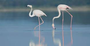 homepage birdlife cyprus