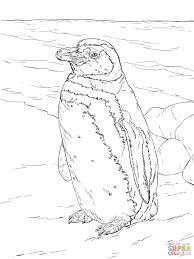 printable coloring pages penguins