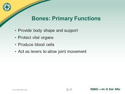 2011 national safety council the human body lesson ppt download