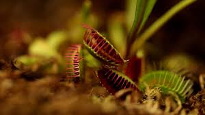 smarty plants uncovering the secret world of plant behaviour