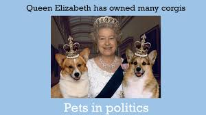 pets in politics by cara edenfield groupbygroup wordpress com