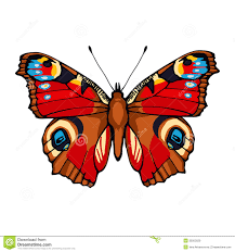peacock butterfly vector illustration stock vector