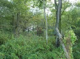 file kołobrzeg ekopark wschodni dscf8560 jpg wikimedia commons
