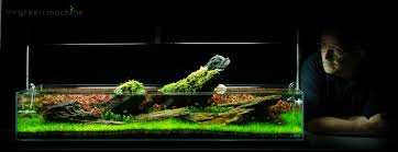 Aquarium Aquascapes Aquarium Aquascape Tutorial Guide U0027crimson Sky U0027 By James Findley