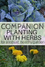best 25 companion planting ideas on pinterest companion