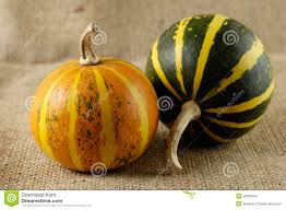thanksgiving still life two gourds still life royalty free stock photos image 20996408