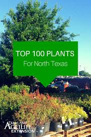 30 best native plant reference live in north texas here u0027s a list of the top 100 plants for north