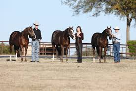 Black Mustang Ranch Pilot Point Texas Select Breeders Services Stallion Freezing And Equine