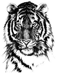 tiger design i want a small version of thissss ink