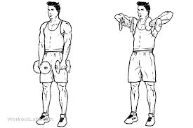 Incline Bench Dumbbell Rows Upright Dumbbell Row From The Illustrated Exercise Guide At Http