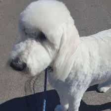 west side abq canine magic u2013 canines that look so good u2026 you would