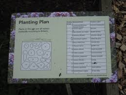 native plants uk plants for bugs