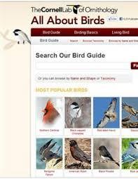 Ontario Backyard Birds Wild Birds Unlimited Online Bird Identification Delafield Wi