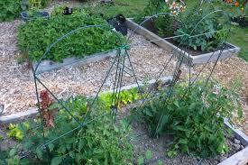 cage a crop
