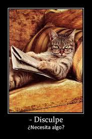 Newspaper Cat Meme - necesita algo estas son im磧genes varias para compartir en las