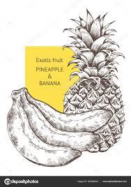 pineapple banana fruit hand drawn vector sketch background