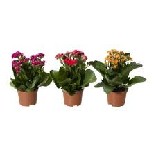 Potted Plants Wedding Centerpieces by Wedding Table Decorations Potted Plants Woman Getting Married
