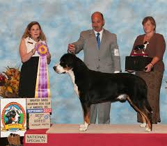 belgian sheepdog national specialty 2014 dog show 2014 09 07