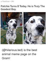 Best Animal Memes - 25 best memes about animal meme animal memes