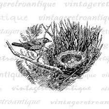 shop bird u0027s nest art on wanelo