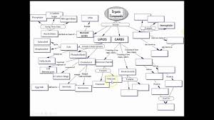 answers organic molecules concept map youtube