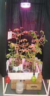 led indoor gardening