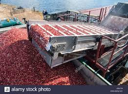 cranberry massachusetts stock photos u0026 cranberry massachusetts