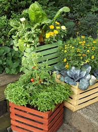 fresh ideas for growing vegetables in containers edible flowers