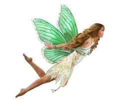 fairy bioinformatics r u0026d