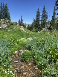exploring utah cecret lake and albion basin trails alta area