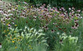 colorado perennial perennial flowers tagawa gardens nursery