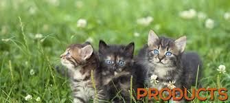 cat raw food diet all natural cat food premium cat food