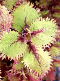 Tropical House Plants Names - houseplants