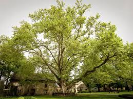 european tree of the year 2013
