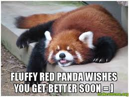 It Gets Better Meme - fluffy red panda wishes you get better soon make a meme